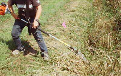 Limpeza de terrenos obrigatória